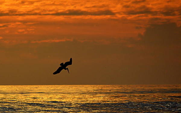 Photograph - Sunset Dive by AJ  Schibig