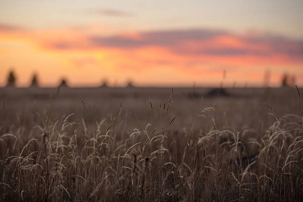 Photograph - Sunset Fields by Ryan Heffron