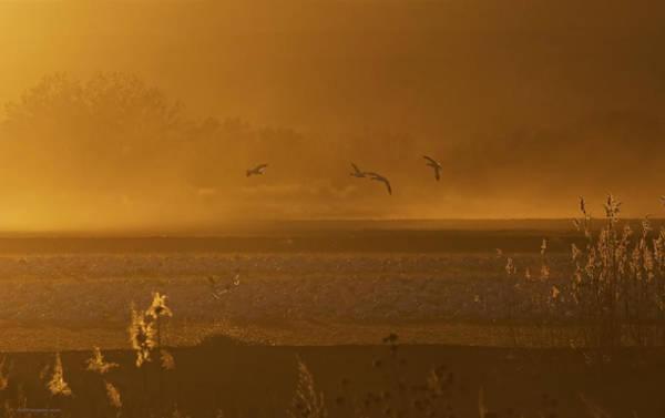 Photograph - Sunset Flight by Britt Runyon
