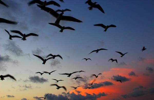 Photograph - Sunset Flight by Candice Trimble