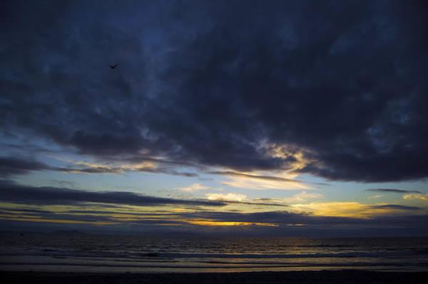 Ventura Photograph - Sunset Flight by Mitch Boyce