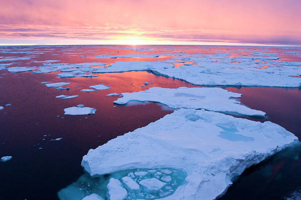 Conserved Photograph - Sunset, Greenland Sea, East Coast by Daisy Gilardini