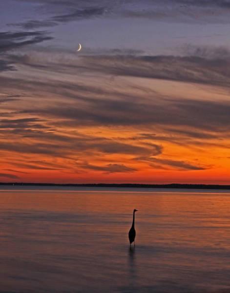 Bob Fisher Photograph - Sunset Herring by Bob Fisher