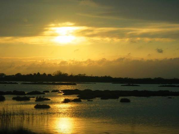Photograph - Sunset In Camargue - France by Cristina Stefan