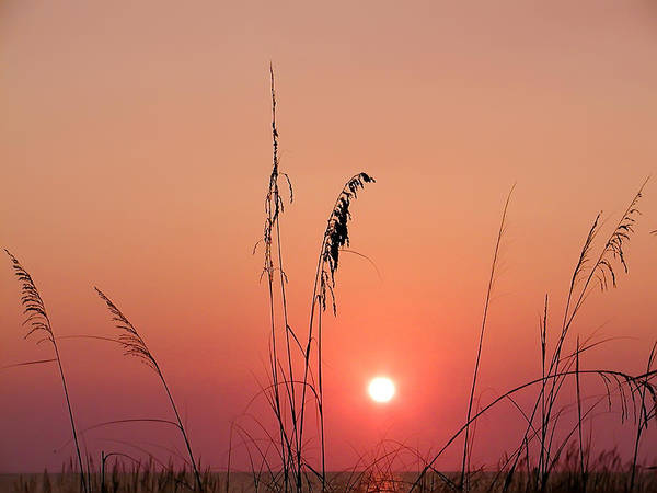 Photograph - Sunset In Tall Grass by Bill Cannon