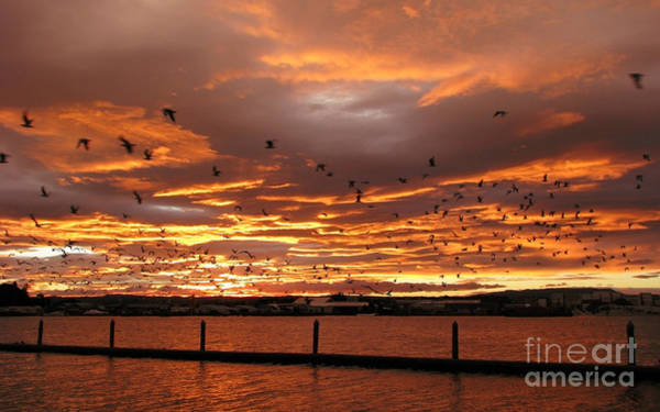 Photograph - Sunset In Tauranga New Zealand by Jola Martysz