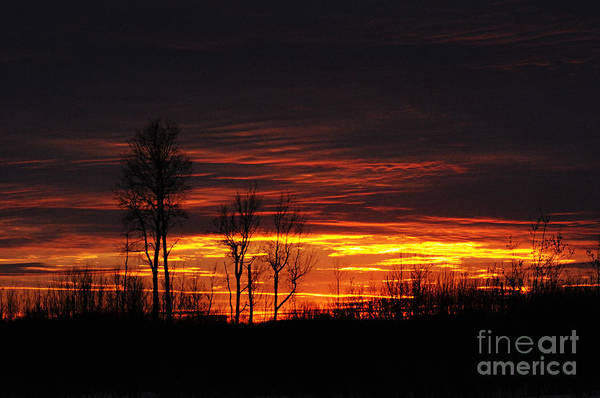 Photograph - Sunset In The Bog by Larry Ricker