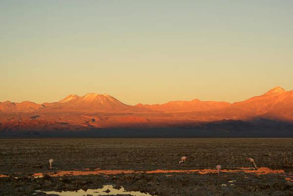 Salar De Atacama Photograph - Sunset In The Desert - Atacama - Chile by Lelia Valduga
