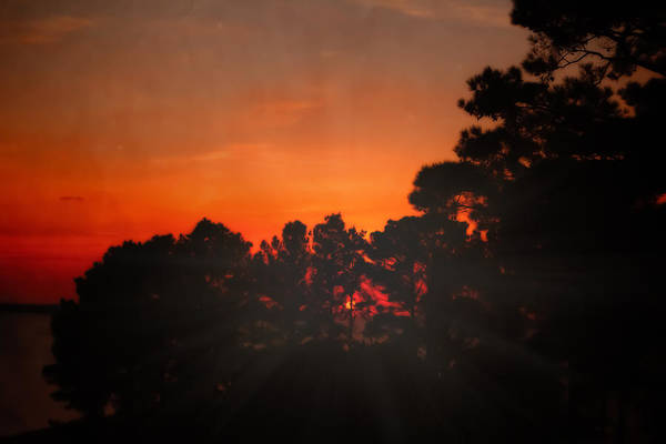 Photograph - Sunset In The Pines by Kim Henderson