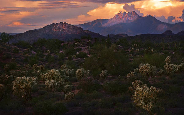 Dusty Photograph - Sunset Lit Cactus Over Four Peaks by Dave Dilli
