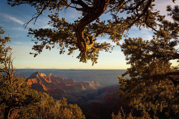 Cedar Tree Photograph - Sunset Over Grand Canyon by Eric R. Hinson