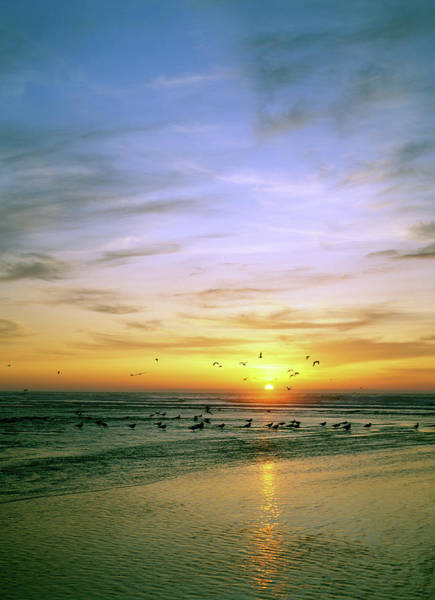 Oregon Dunes Photograph - Sunset Over Mouth Of Siltcoos River by Animal Images