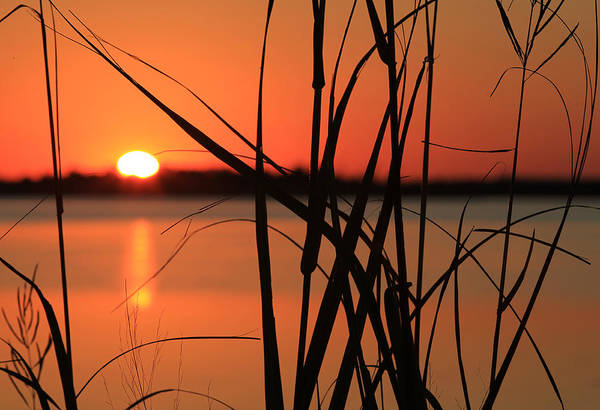 Photograph - Sunset Over The Bay by Pete Federico