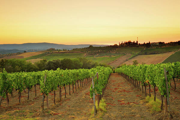 Environmental Conservation Photograph - Sunset Over The Vineyard From Tuscany by Csondy