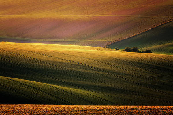 Shrubs Photograph - Sunset Palette by Marek Boguszak