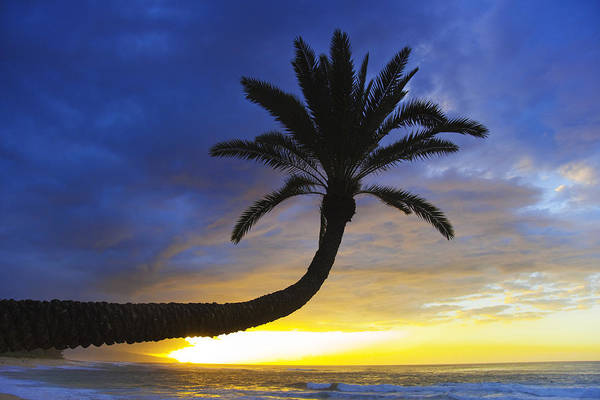 Hawaiian Sunset Photograph - Sunset Palm by Sean Davey