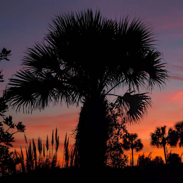 Photograph - Sunset Palms by Evie Carrier