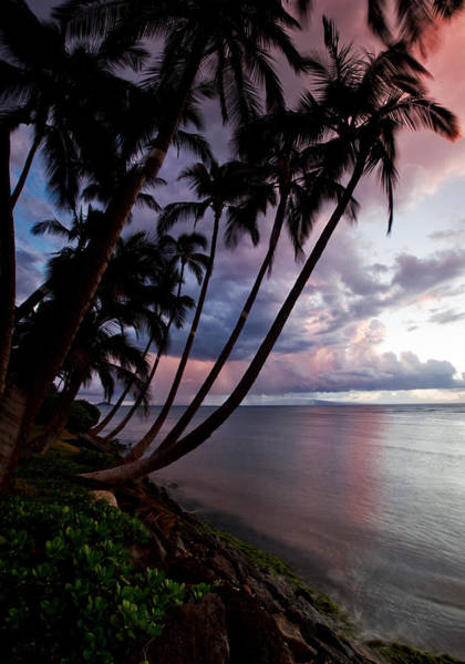 Kihei Photograph - Sunset Palms by James Roemmling