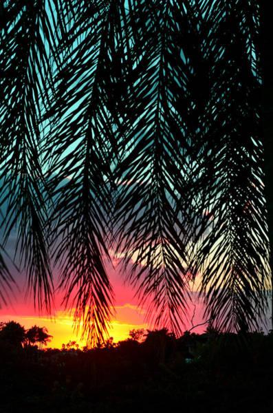 Uplift Photograph - Sunset Palms by Laura Fasulo