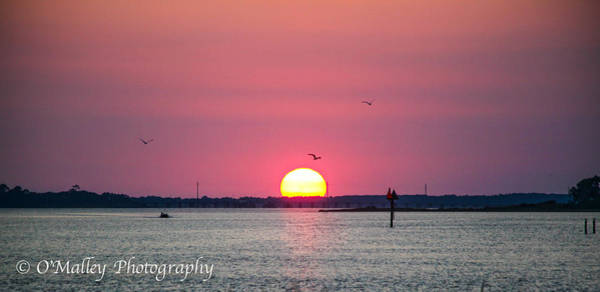 Harkers Island Photograph - Sunset Pink by Paula OMalley