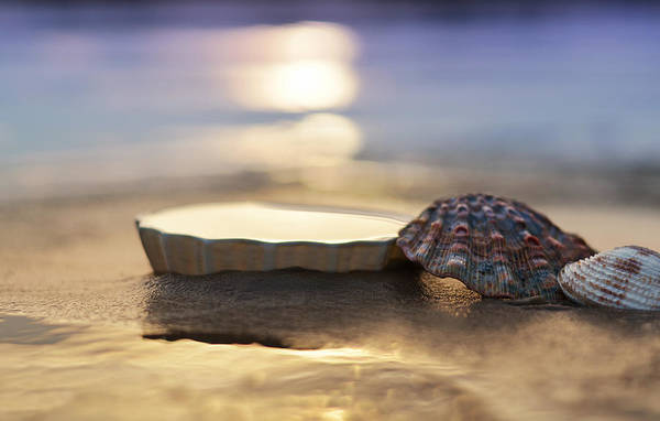 Uplift Photograph - Sunset Shells by Laura Fasulo