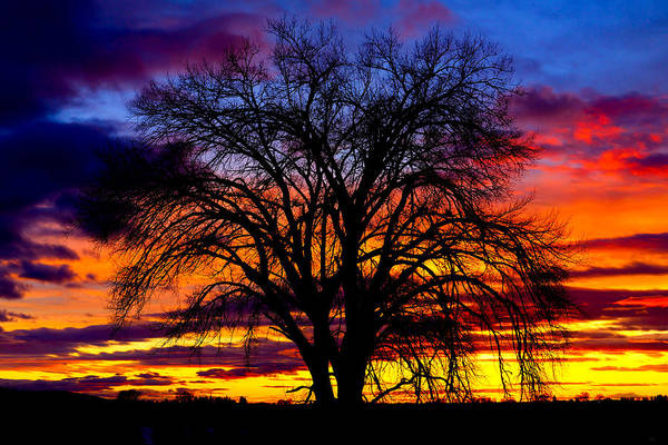 Photograph - Sunset Silhouette by Greg Norrell