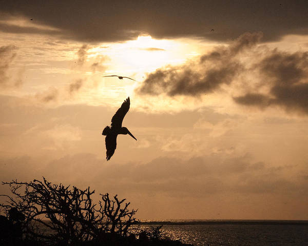 Photograph - Sunset Soaring by William Beuther