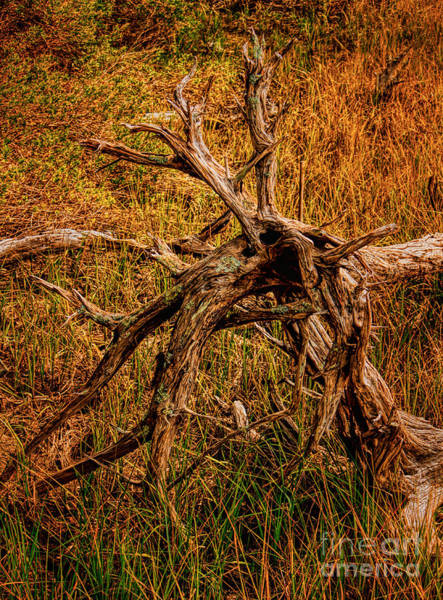 Photograph - Sunset Stump by Dave Bosse