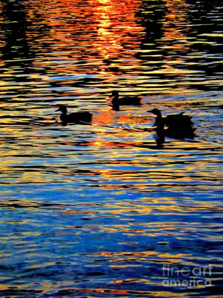 Photograph - Sunset Swim by Robyn King