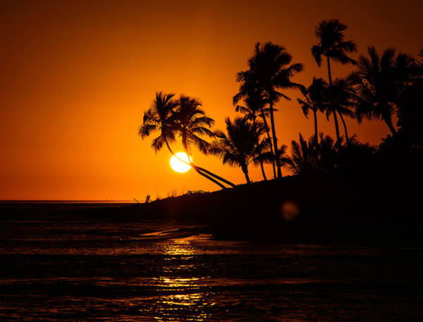 Wall Art - Photograph - Sunset Through The Palm Trees by Kathi Isserman