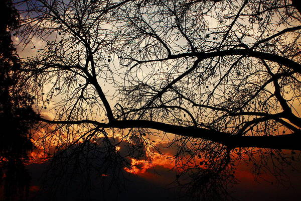 Photograph - Sunset Through The Trees by Aidan Moran