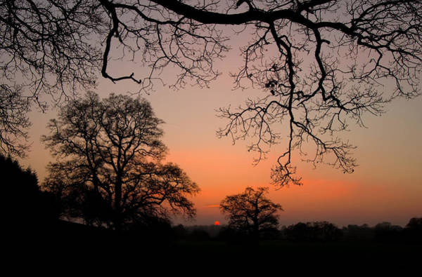 Photograph - Sunset Through The Trees by Pete Hemington