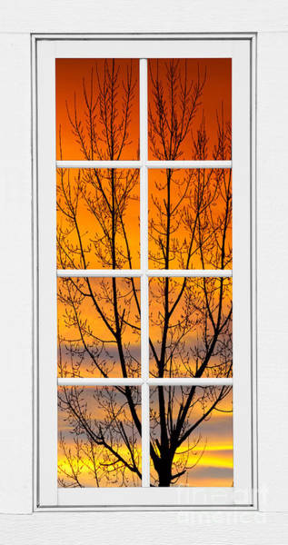 Wall Art - Photograph - Sunset Through The Trees Window View  by James BO Insogna