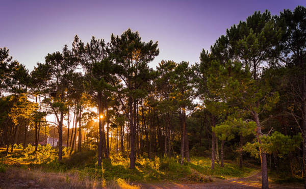 Photograph - Sunset Through Trees by Gary Gillette