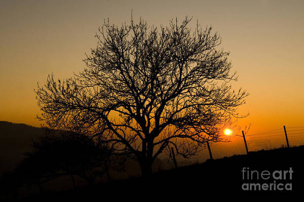 Late Afternoon Wall Art - Photograph - Sunset Tree by Anne Gilbert