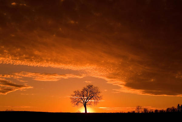 Photograph - Sunset Tree by Don Johnson