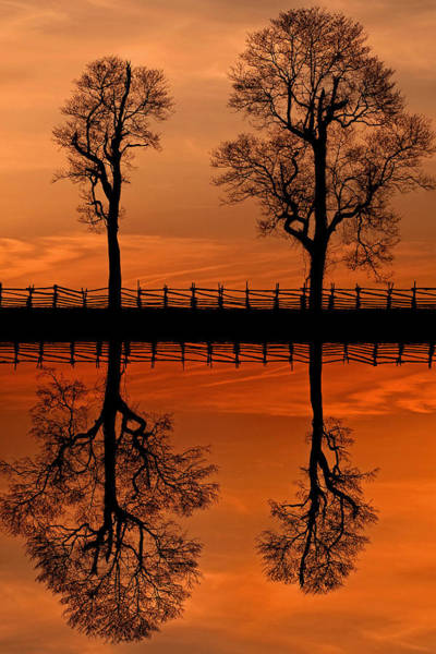 Photograph - Sunset Tree Reversed Reflection by Don Johnson
