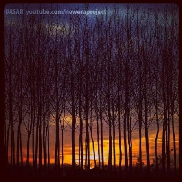 Wall Art - Photograph - Sunset Trees by Devid Raziel Penguti