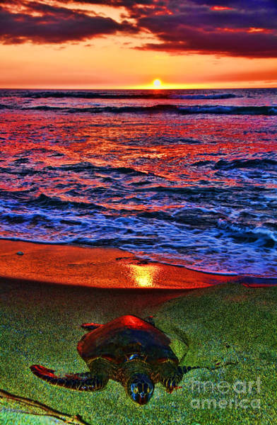 Photograph - Sunset Turtle By Diana Sainz by Diana Raquel Sainz