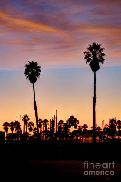 Photograph - Sunset Two Palm Trees by Dan Friend