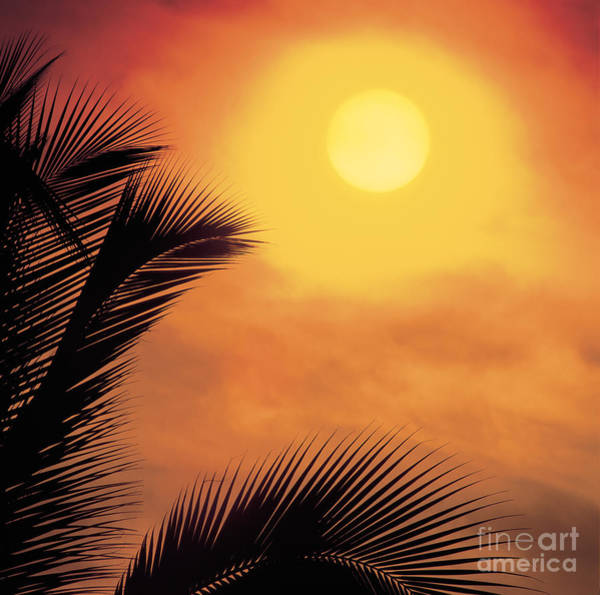 Photograph - Sunset With Palm Tree Fonds by Dale E Boyer