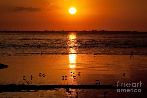 Photograph - Sunset With The Birds Photo by Meg Rousher