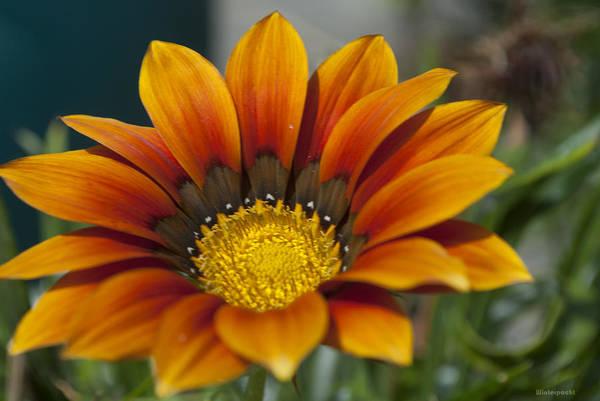 Photograph - Sunshine Garden by Miguel Winterpacht