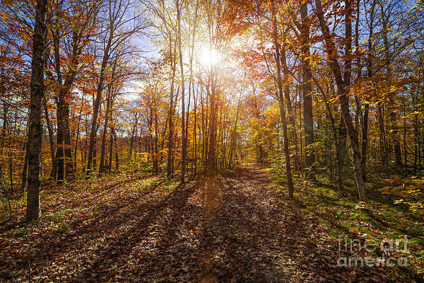 Photograph - Sunshine In Fall Forest by Elena Elisseeva