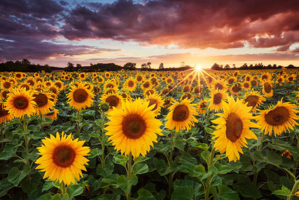 Sunset Colors Photograph - Sunshine by Michael Breitung