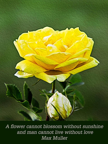 Digital Art - Sunshine On A Yellow Rose by Omaste Witkowski