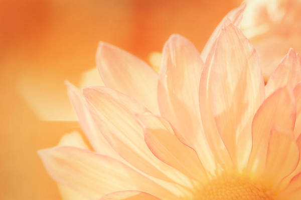 Petal Wall Art - Photograph - Sunshine by Scott Norris