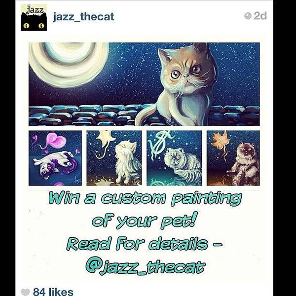 Charity Wall Art - Photograph - Super Cool Competition From @jazz_thecat by Samantha Charity Hall