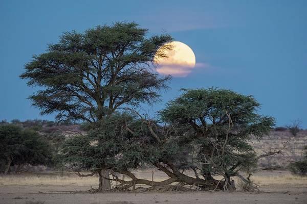 Perigee Moon Photograph - Super Moon Over The Kalahari by Tony Camacho/science Photo Library
