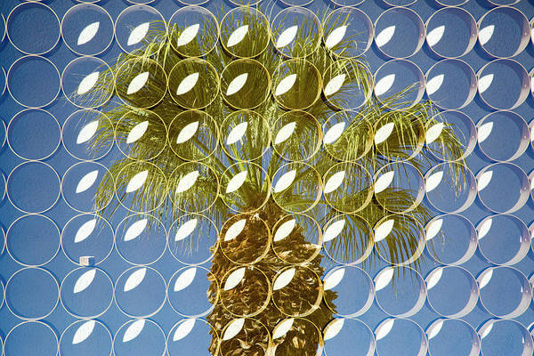 Overlay Photograph - Superimposed Image Over Palm Trees by Julien Mcroberts